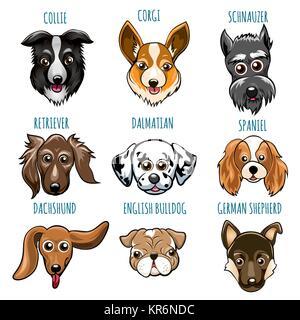 Set of Various Dog Head. Spaniel, bulldog, retriever, dalmatian and other breed. Vector illustartion isolated on - Stock Photo