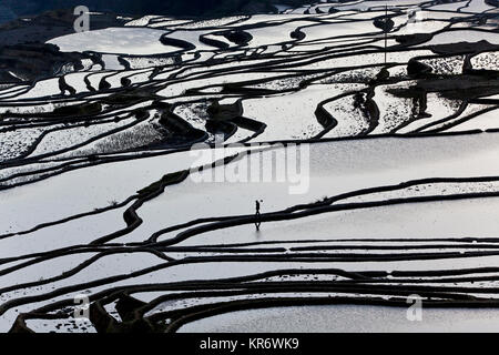 High angle view of reflections off water filled rice terraces. - Stock Photo