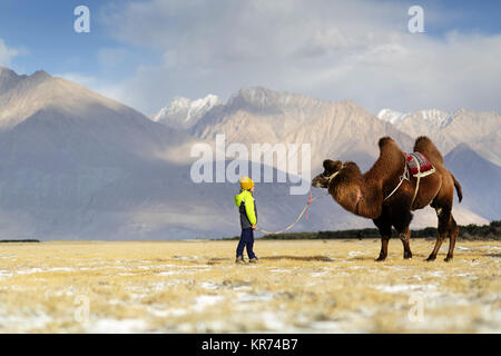 Young western boy riding double hump camel and crossing the desert in the Nubra valley, Ladakh, Jammu and Kashmir, - Stock Photo