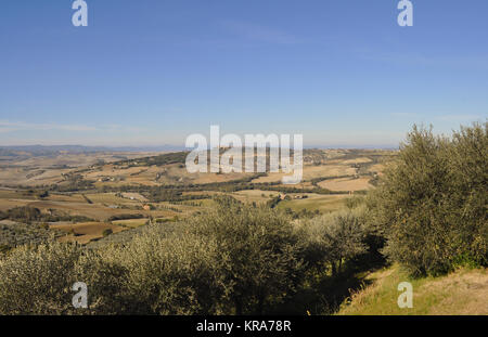 olive grove with panorama,in tuscany - Stock Photo