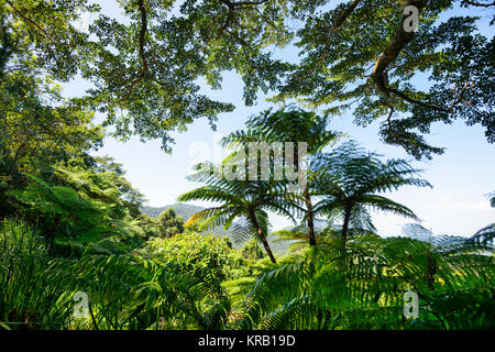 View of the rainforest from Alexandra Range Lookout, Cape Tribulation, Daintree National Park, Far North Queensland, - Stock Photo
