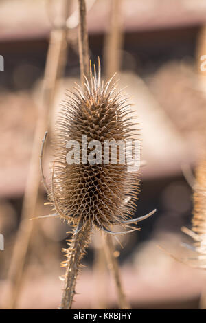 Dry brown thistle near by the rails - Stock Photo
