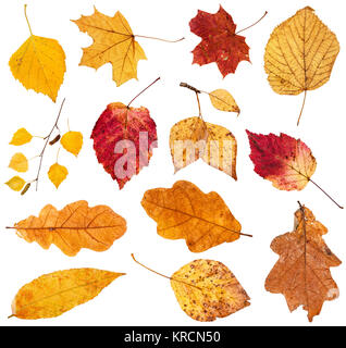 collage from various fallen leaves isolated - Stock Photo