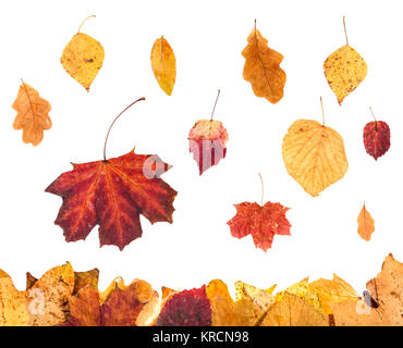 collage from red and yellow leaves isolated - Stock Photo