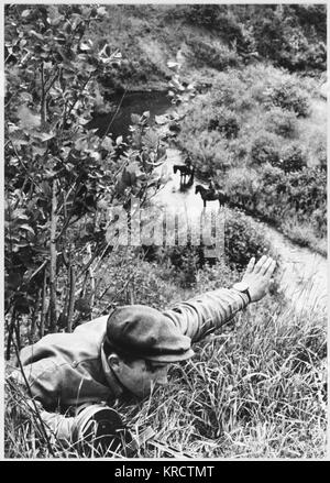 A partisan reconnaisance unit in Briansk. A member hides in the undergrowth and signals to his comrades. Date: circa - Stock Photo