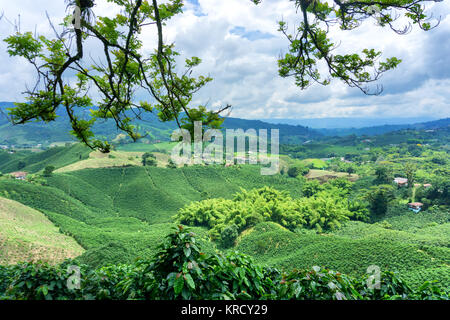 Coffee Landscape in Colombia - Stock Photo