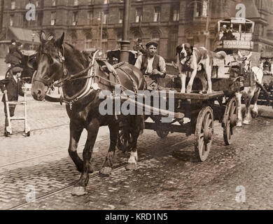 A driver who did not need police protection -- a man with his horse and cart, and a dog for good measure.  The Liverpool - Stock Photo