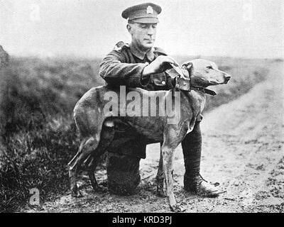 A British soldier securing a message to a messenger dog's collar on the Western Front during the First World War. - Stock Photo
