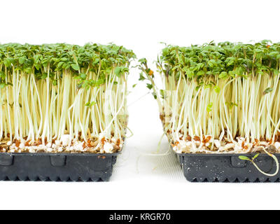 Watercress plants growing in a little black tray, towards white - Stock Photo