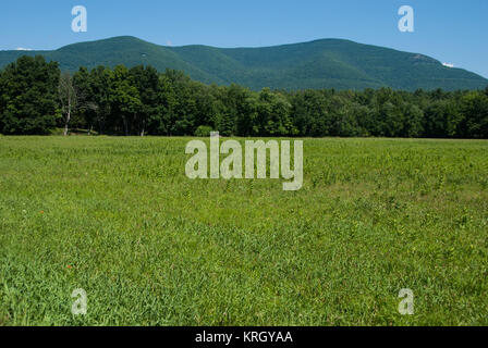 Zena Cornfield with Overlook Mountain in the Background - Stock Photo