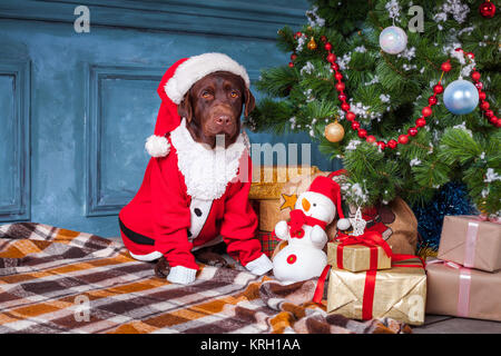 the black labrador retriever sitting with gifts on christmas decorations background stock photo - Black Lab Christmas Decor