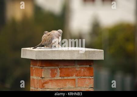 Pigeons on Chimney - Stock Photo