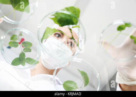 biotechnologist engineer at work. - Stock Photo