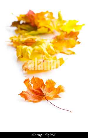Colorful autumn leaves. - Stock Photo