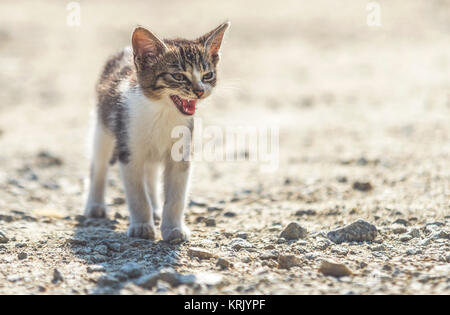 close up on cute homeless cat on street - Stock Photo