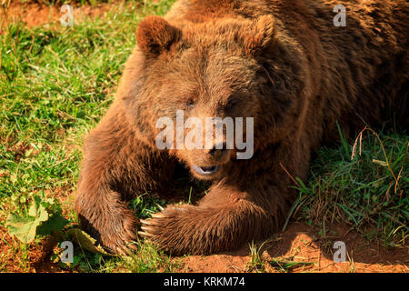 Bear in zoo natural park - Stock Photo