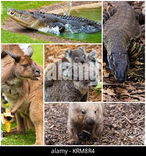 Photo collage of Australian native wildlife - Stock Photo