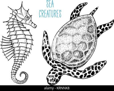sea creature cheloniidae or green turtle and seahorse. engraved hand drawn in old sketch, vintage style. nautical - Stock Photo