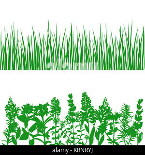 Grass and plants detailed silhouettes on white. - Stock Photo