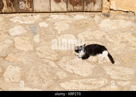 Black - and-white stray cat on the rocks under the rays of the sun. - Stock Photo
