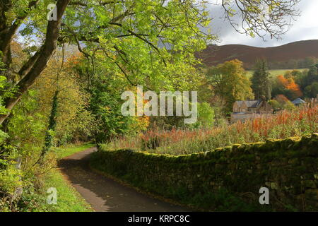 Quiet lane lit by autumn sun leading to Codley Gate Farm by Vindolanda Roman fort and museum, near Hadrian's Wall, - Stock Photo