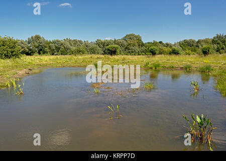 Lake in a marshland landscape on a sunny summer day with clear blue sky in Bourgoyen nature reserve, Ghent, Belgium - Stock Photo