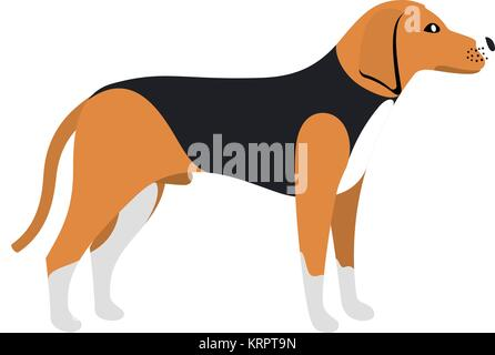 Beagle Dog - Vector color serious dog Beagle breed standing - Stock Photo