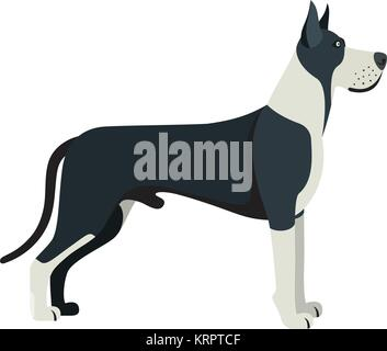 Great Dane dog breed - on white background. Vector illustration - Stock Photo