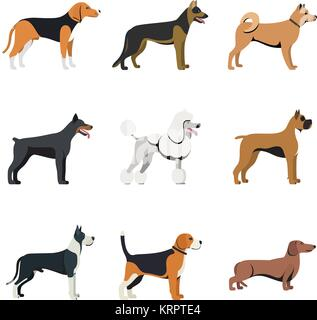Different type of dogs breed set with Beagle, German shepherd, Akita Inu, Doberman, Poodle, Boxer, Great Dane and - Stock Photo