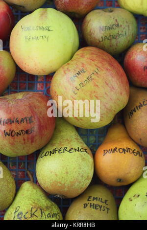 Malus domestica and Pyrus communis. Apple and  pear varieties displayed in autumn, UK - Stock Photo