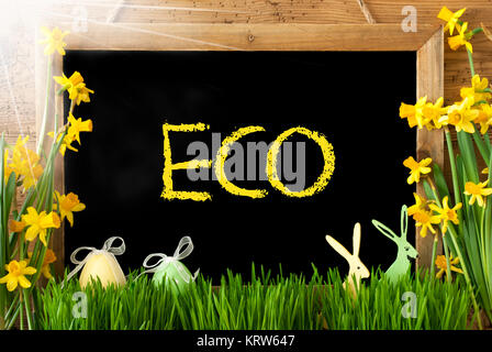 Blackboard With English Text Eco. Sunny Spring Flowers Nacissus Or Daffodil With Grass, Easter Egg And Bunny. Rustic - Stock Photo