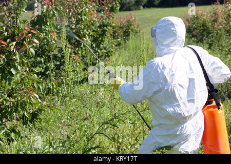 Farmer spraying toxic pesticides or insecticides in fruit orchard - Stock Photo