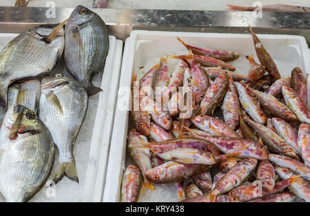 Stand with fishes and squids on market place. Fresh seafood on ice - Stock Photo