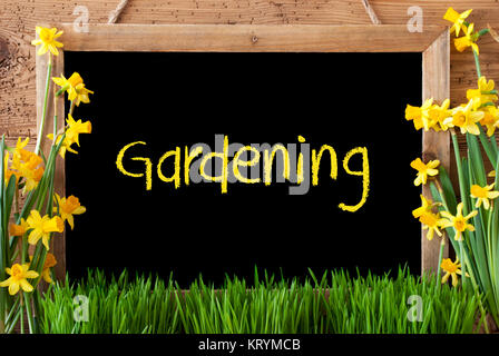 Blackboard With English Text Gardening. Spring Flowers Nacissus Or Daffodil With Grass. Rustic Aged Wooden Background. - Stock Photo