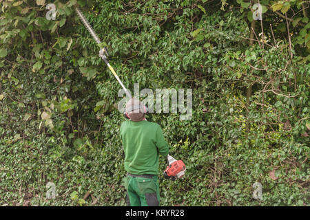 cutting a hedge with engine hedge trimmer. - Stock Photo
