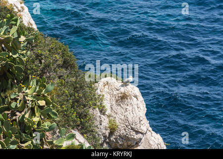 seagull on a rocky outcrop in the mediterranean - Stock Photo