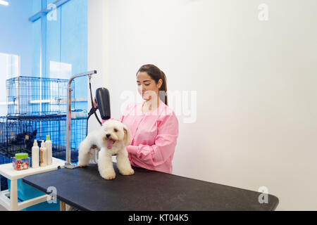 Young woman working in pet shop, brushing and drying dog hair, girl grooming puppy for beauty in store. People, - Stock Photo