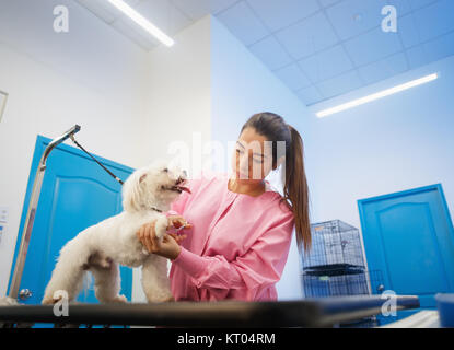 Young woman working in pet shop, trimming dog hair, girl grooming puppy for beauty in store. People, jobs, professions - Stock Photo