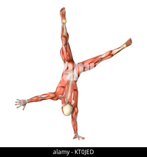 3D Rendering Male Anatomy Figure on White - Stock Photo
