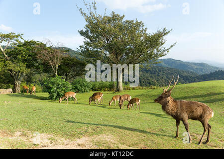 Group of deer at mountain - Stock Photo