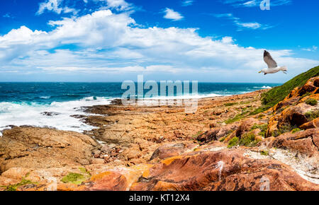 Tremendous Robbberg nature reserve coastline at Plettenberg bay South Africa. A seagull flies through the scene. - Stock Photo