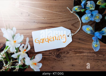 Sunny Label With English Text Gardening. Spring Flowers Like Grape Hyacinth And Crocus. Aged Wooden Background - Stock Photo