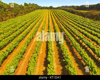 Aerial view of vineyard in Coonawarra region Australia featuring rows of grapes ands vines - Stock Photo