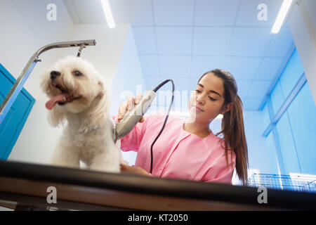 Young woman working in pet shop, trimming dog hair with clipper, girl grooming puppy for beauty in store. People, - Stock Photo