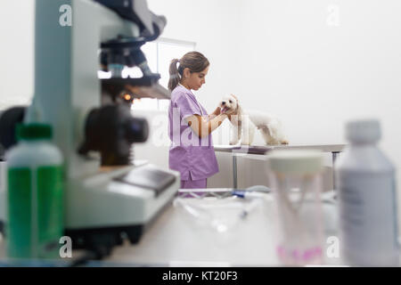 Young latina woman at work as veterinary, vet during visit. Animal doctor visiting sick pet in clinic and checking - Stock Photo