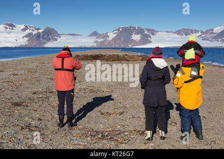 Eco-tourists watching group of male walruses (Odobenus rosmarus) resting on beach at Phippsøya in Sjuøyane, Nordaustlandet, - Stock Photo