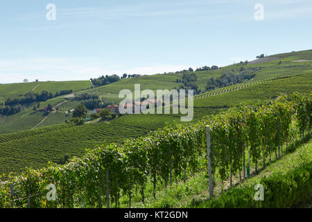 Green vineyards and hills in a sunny day, blue sky - Stock Photo