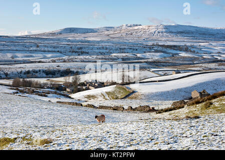 Sheep graze in snow-covered fields above New Houses hamlet, near Horton-in-Ribblesdale, North Yorkshire, UK, with - Stock Photo