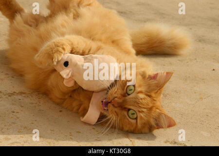 Crazy cat with cat-nip