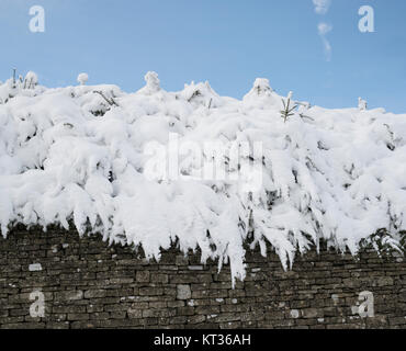 Pine tree bush covered in snow on top of a cotswold stone wall. Chedworth, Cotswolds, Gloucestershire, England - Stock Photo